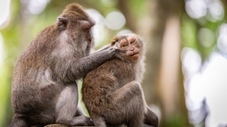 モラルハラスメントの加害者は、被害者のことを見下して、「サル」と呼んでいることがありますが、彼らは「自分のこと」を言っているのです。被害者に映しだした「サル」は「自分」なのです。加害者は、自分が抱えている「深刻な劣等コンプレックス」に向き合えば良いでしょう。
